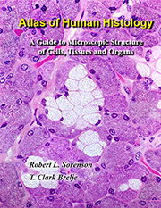 histology guide